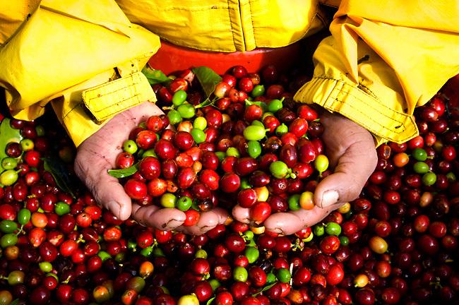 Giá cà phê nguyên chất